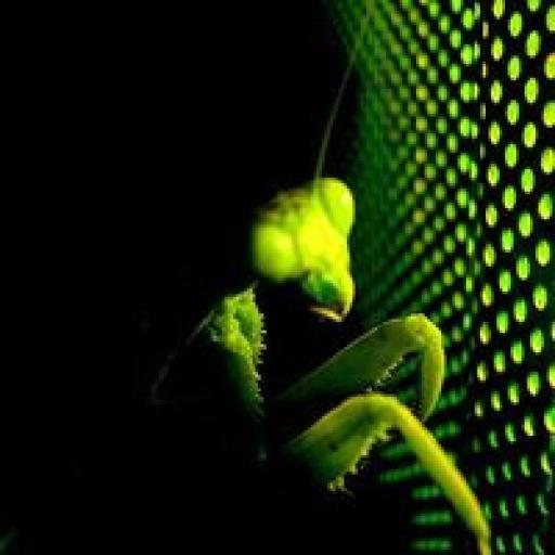 mantis.musica